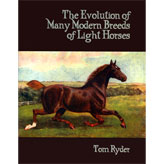 The Evolution of Many Modern Breeds of Light Horses
